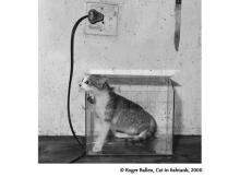 133-cat-fishtank