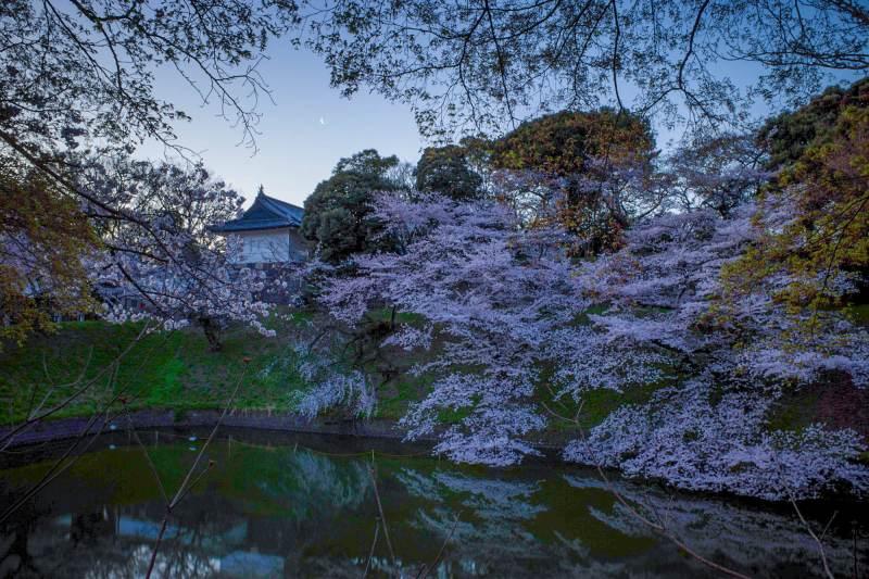 レタッチで全体調整をした写真(桜)