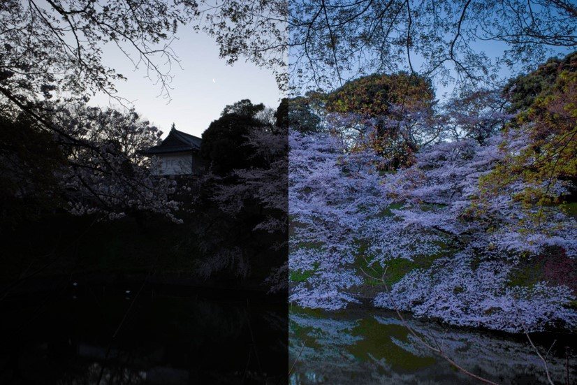 ペンタブレットを使ってレタッチした写真(桜)